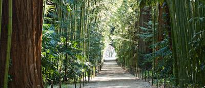 bambouseraie Anduze Mialet